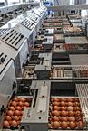 Élelmiszeripar iparági megoldások